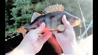 Рыбалка реке плюсса