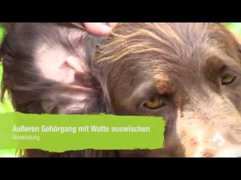 Ohrmilben beim Hund behandeln - Anwendung der noJuck noSchupp Ohrenpflege