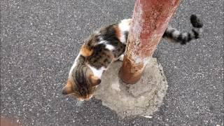 Moj maček ima rascufana vuha, Zvonko Špišić