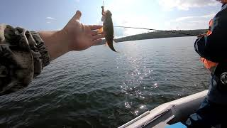 Рыбалка на чумыше в мае 2020