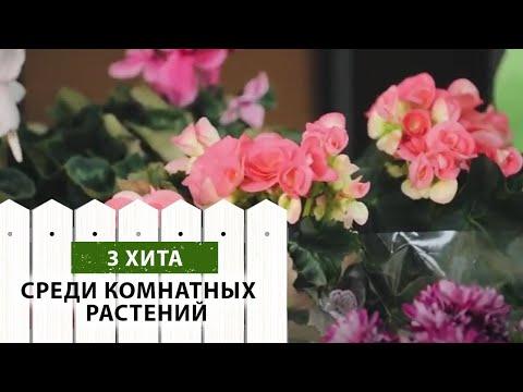 3 хита среди комнатных растений