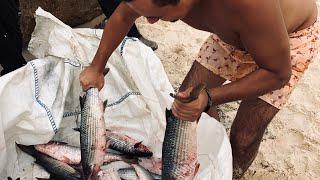 Как ловят кефаль в средиземном море