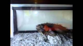 preview picture of video 'Aquarium Ikan Hias : Aquarium Exotik Purbasari, Purbalingga   SERU BANGET !!'