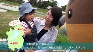 2019/08/01放送・知ったかぶりカイツブリにゅーす