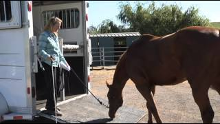 How To Solve Horse Trailer Loading Issues