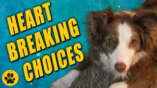 When is it time to Euthanize your Dog?