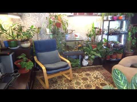 Цветы в моем доме. Комнатные растения. Краткое знакомство со мной и моим хобби.