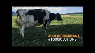 How to reduce cow's impact on climate ? - Agolin Ruminant