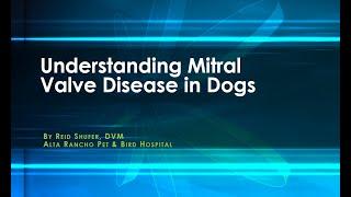 Understanding Mitral Valve Disease in Dogs