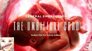 Medical embryology - The umbilical cord