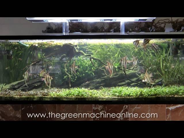Aquascaping Shop Tour of The Green Machine