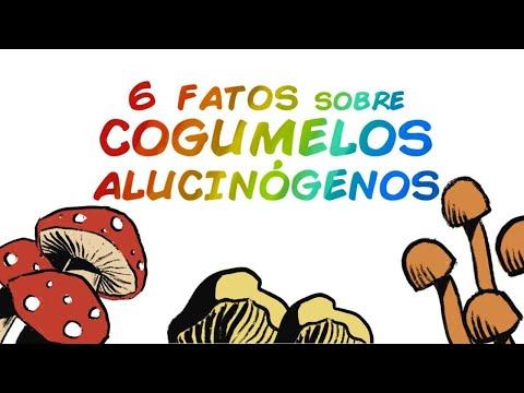6 FATOS SOBRE COGUMELOS MÁGICOS E PSILOCIBINA