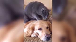 Смешное видео с животными Подборка 2018