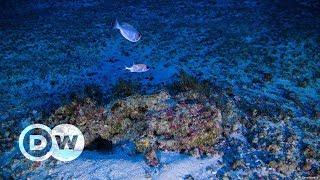 A pesquisa que descobriu os corais na Amazônia