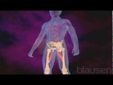 Quels parasites peuvent être dans les articulations et les muscles