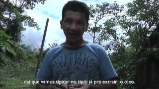Extração de óleo de Patauá