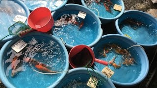 Fishy business at KL's Pudu market