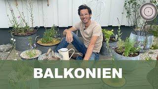 Bepflanzung einer Terrasse, Bienenpflanzen für den Balkon  - worauf ich achten muss...Teil 1