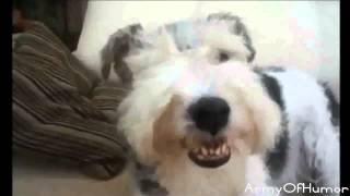 Подборка улыбок животных