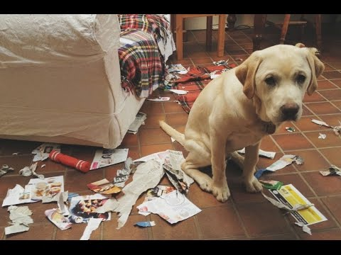 Funny Guilty Dogs Compilation (2017)