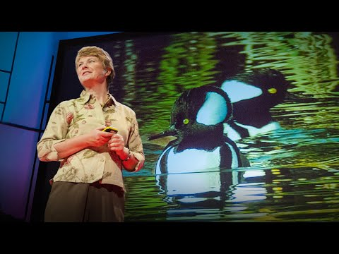 TED Talks: Janine Benyus - Biomimicry in Action