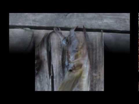 Le moyen pour le rat des parasites