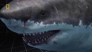 Megalodon Documentary-King of the Seas (Full Documentary)