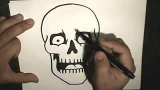Смотреть онлайн Как поэтапно нарисовать череп человека