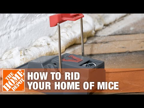 How To Rid Your Home of Mice | The Home Depot