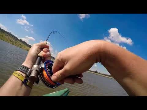 FFF Safaris - Rainbow Trout