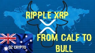 Ripple XRP: From Calf To Bull