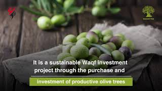 #Olive Tree . . . A symbol of peace and prosperity.