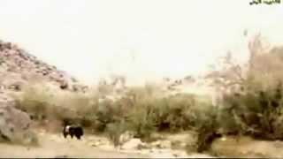 بشار السرحان البدو 2015 تحميل MP3