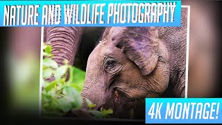 Nature And Wildlife Photography Montage | 4K UltraHD |