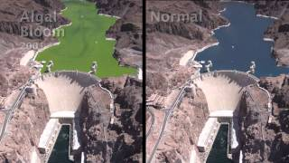 Lake Mead: Clear and Vital