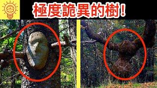 26個世界上【最可怕的樹木】!超詭異!