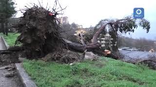 avellino-albero-sradicato-dal-vento-in-via-rotondi