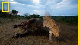 Joel Sartore: Capturing Endangered Species | Nat Geo Live