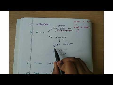 A papilloma nitrogénnel történő megszüntetése