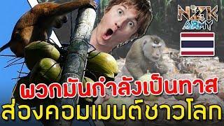 ส่องคอมเมนต์ชาวโลก-คิดเห็นอย่างไรหลังรู้ว่าคนไทยฝึกลิงให้ปีนไปเก็บลูกมะพร้าวได้ถึง 1,600 ลูก/วัน