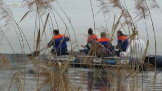 Labodi na Gajševskem jezeru