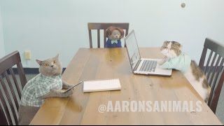 Cats in the Workplace - Aaron's Animals - Video Youtube