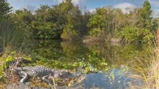 The Everglades | The Coolest Stuff on the Planet