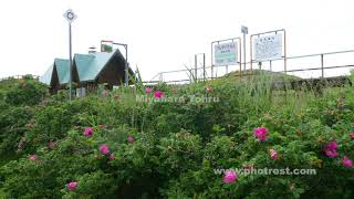 夏の原生花園駅
