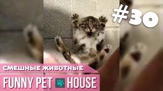 СМЕШНЫЕ ЖИВОТНЫЕ И ПИТОМЦЫ #30 ФЕВРАЛЬ 2019 [Funny Pet House] Смешные животные