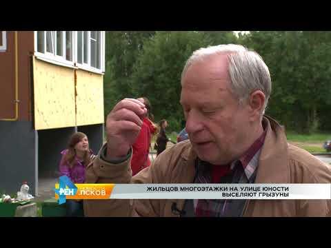 Новости Псков от 26.09.2017 # Жильцов на Юности выселяют грызуны
