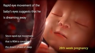 28 Weeks Pregnant: Watch Your Baby's Movement in 28 Week Pregnancy