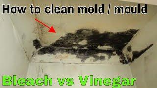 How to remove and kill mold - Bleach vs vinegar