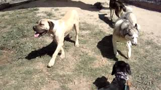 dog training brisbane