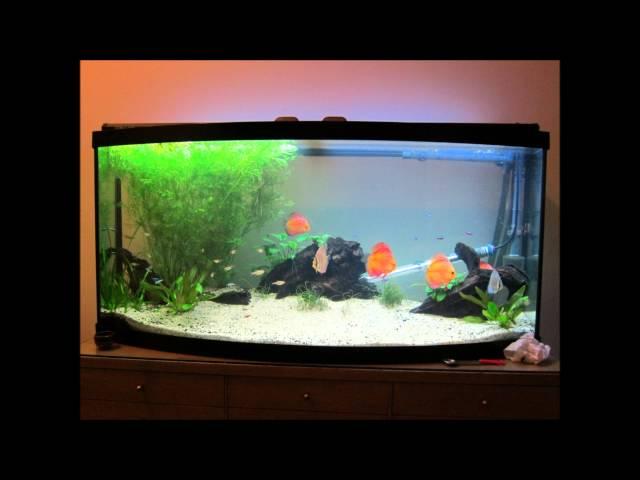 Sarah and Gerrard's Discus Aquarium 1st Year